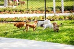 Dog-Parks