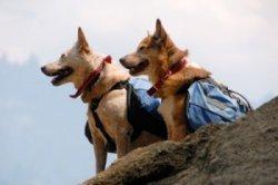 pet-hiking