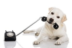 pet-services-businesses