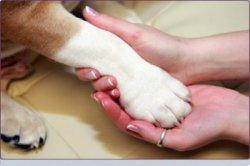 pet-Rescues-Grief.jpg