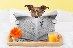 pet-accomodations-bed-breakfast.jpg