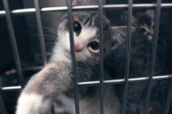 pet-humane-society.jpg