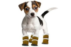 pet-products-other.jpg