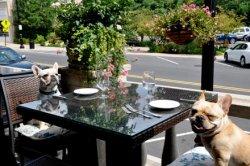 pet-restaurant-other.jpg