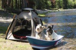 pet-accomodations-camping.jpg