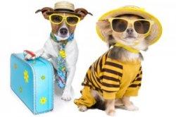 pet-accomodations-vacation.jpg