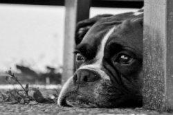 pet-rescue-lost-found.jpg