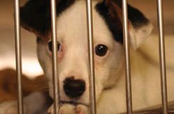 pet-rescue-shelters.jpg