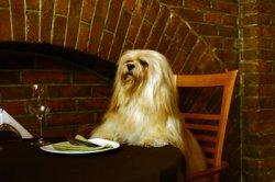 pet-restaurant-bars-pubs.jpg
