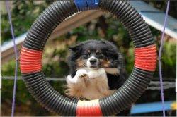 pet-training.jpg