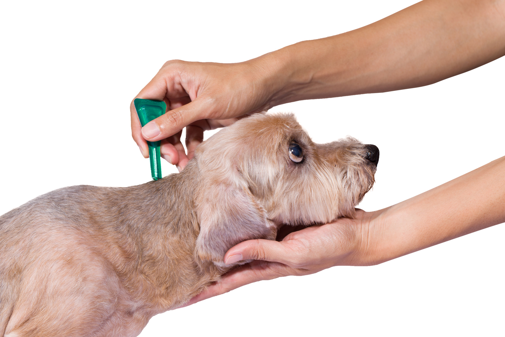 tick and flea prevention