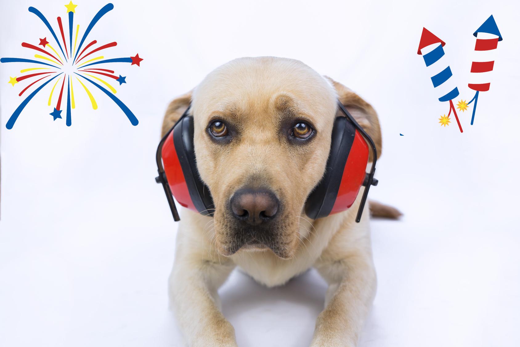 pets fireworks