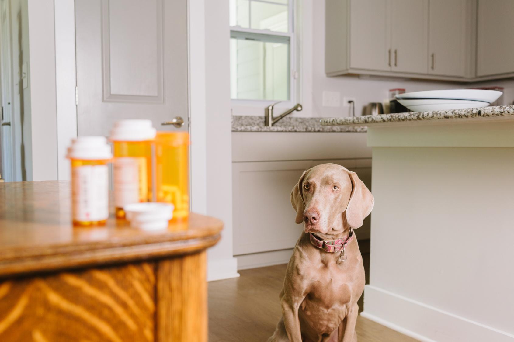 pet food allergies