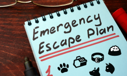 pet emergency prep
